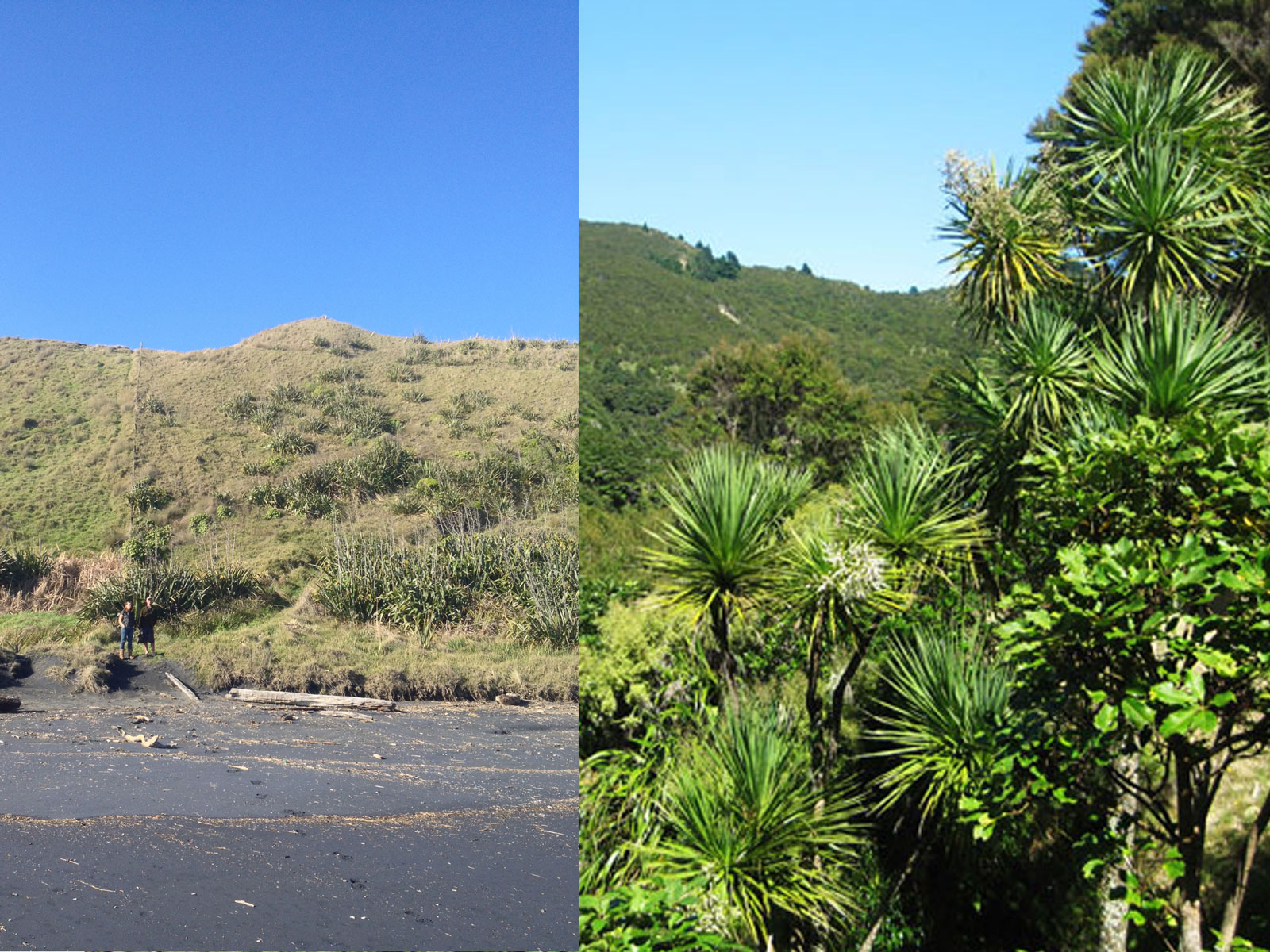 Overgrazed grass on left, healthy NZ bush on right. PiwiWiwi's Carbon Offset project aims to make this change